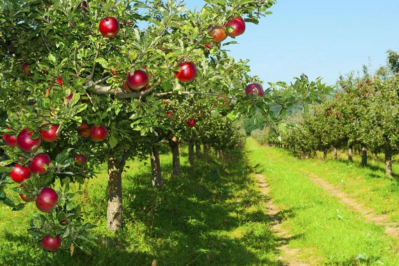 Яблоневый сад разбили в Туркестанской области