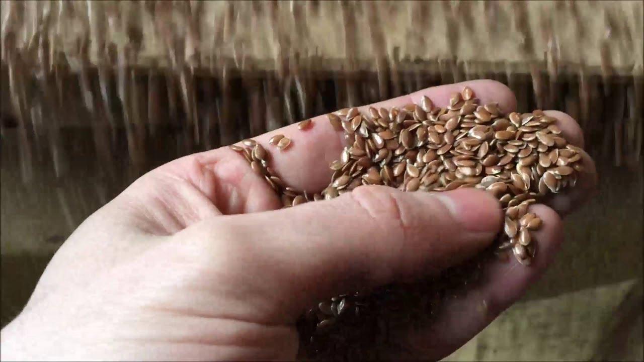 Казахстан впервые занял первое место в мире по производству льна