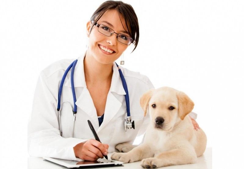 Зарплаты ветеринаров в РК выросли на 23%
