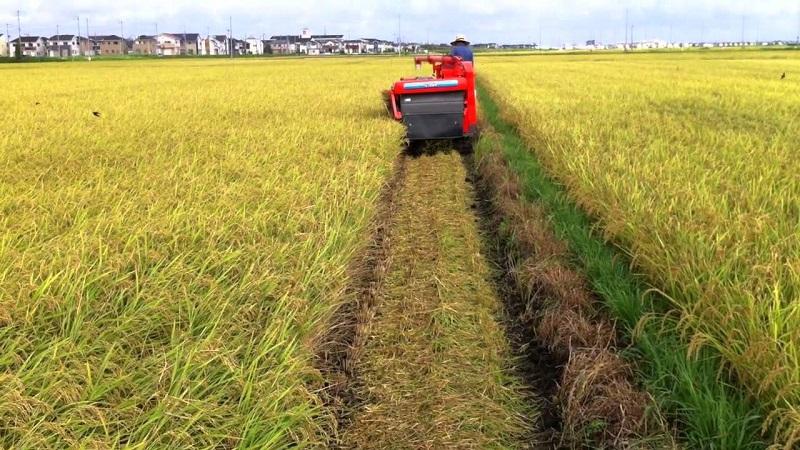 Рисоводы Кызылординской области собрали рекордный урожай