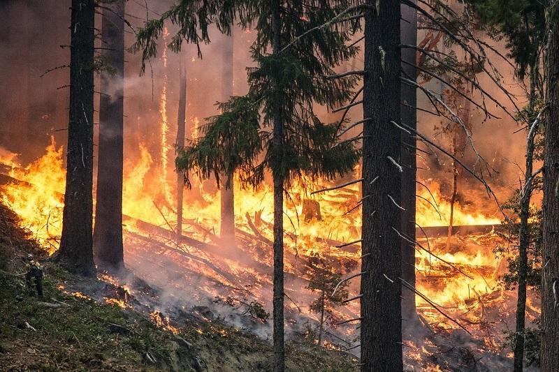 Лесные пожары в Казахстане: ущерб превысил 220 млн тенге