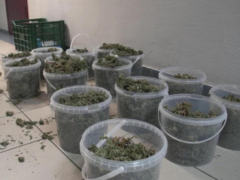 Свыше 20 кг марихуаны и более 1 кг гашиша изъято в Кызылординской области