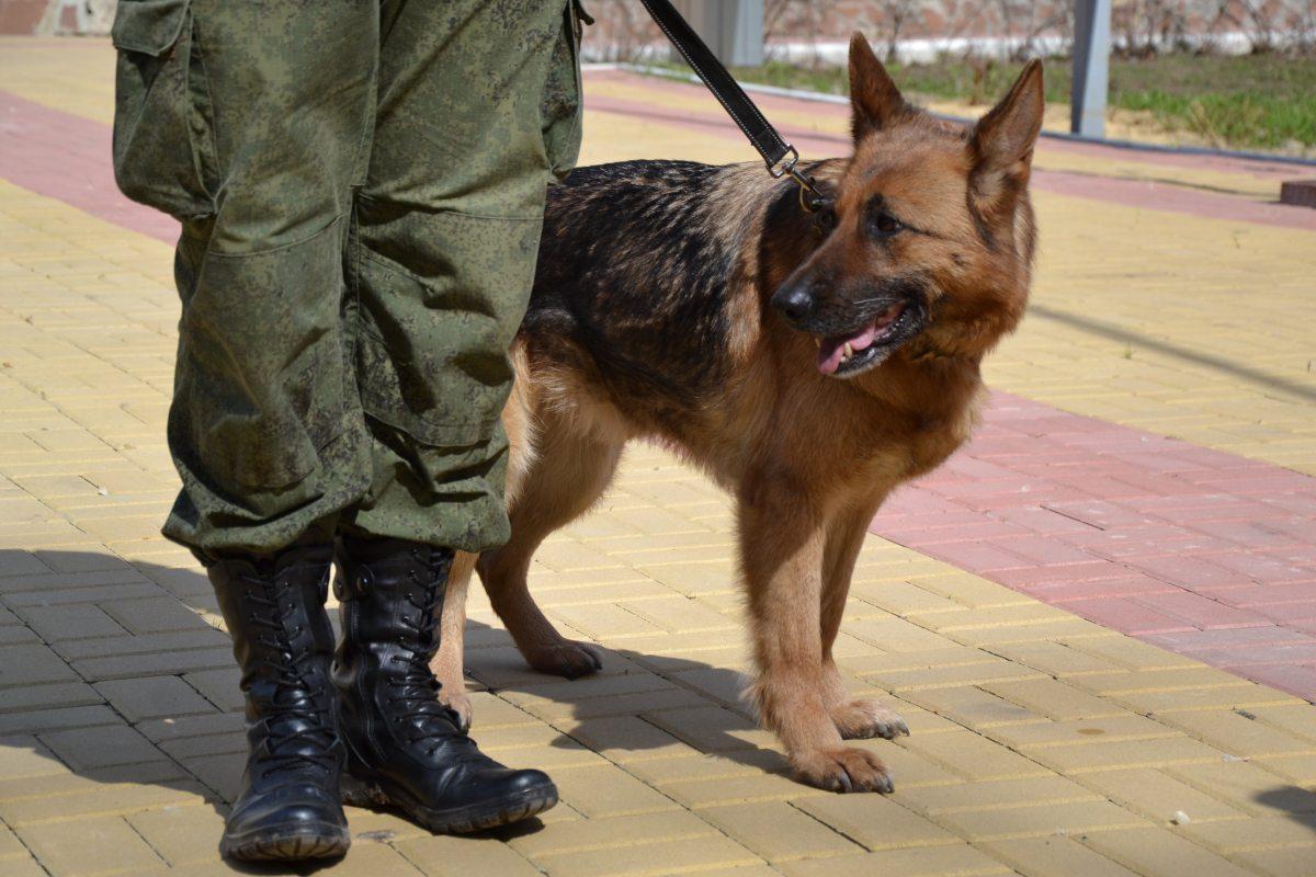 Сколько в Акмолинской области раскрыли преступлений собаки