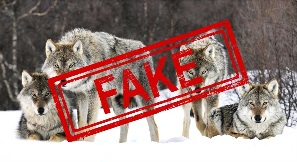 Информация о стае волков близ столицы является фейковой