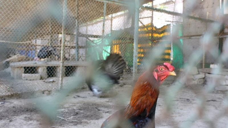 Массовый падеж птицы фиксируют в 7 регионах Казахстана