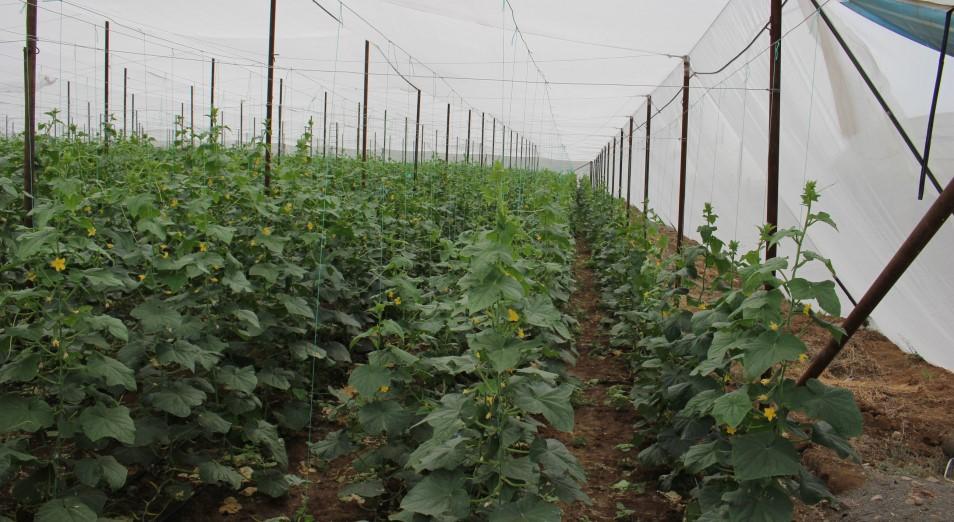 Как овощной бизнес сделать прибыльнее
