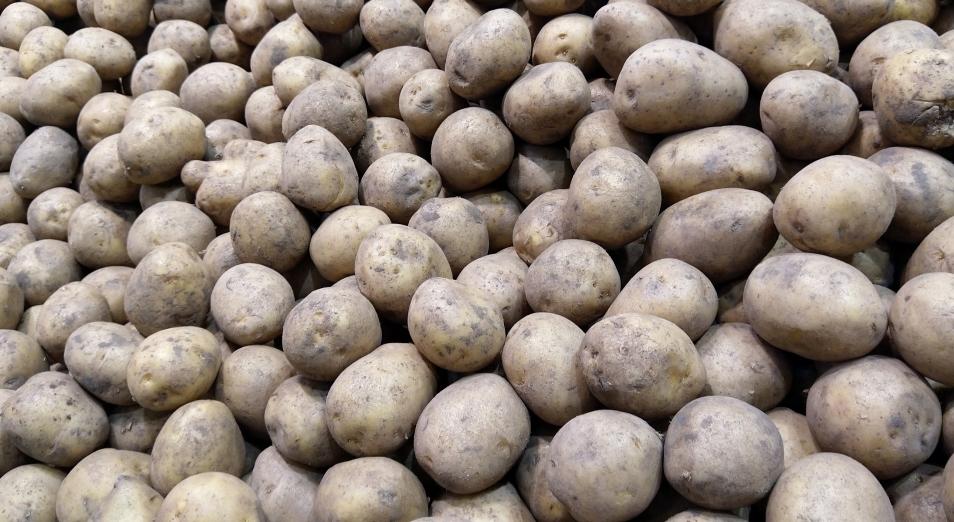 Ученые помогут бизнесу в картофеле