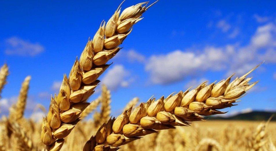В Костанайской области ждут урожай вдвое ниже прошлогоднего