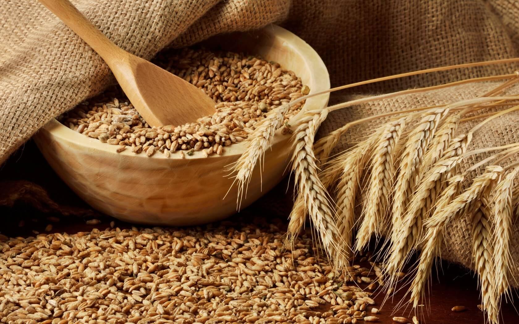 Минсельхоз США сохранил прогноз производства казахстанской пшеницы в текущем сельхозгоду