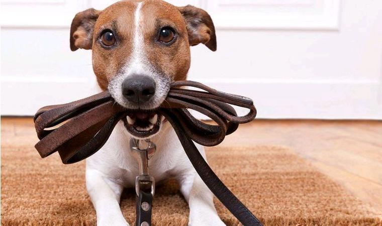 Министр разъяснил, на каком расстоянии от дома можно выгуливать собак