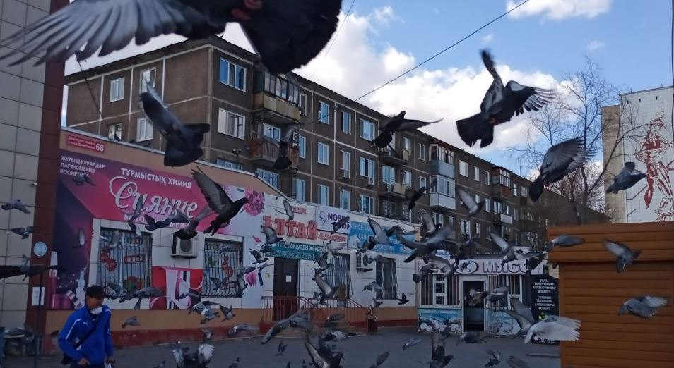 Голуби летят над нашей зоной. Карантинной