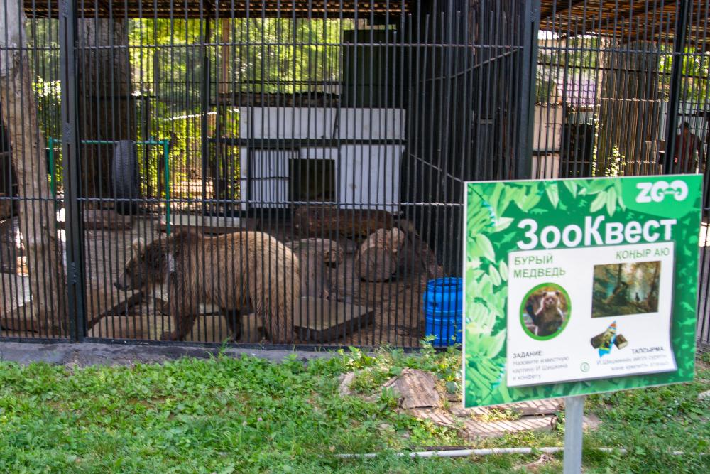 Алматинский зоопарк подал в суд на «зоозащитников»