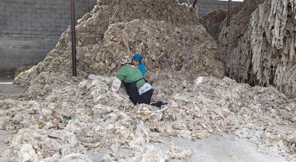 В Казахстане простаивают практически все заводы по переработке овечьей шерсти