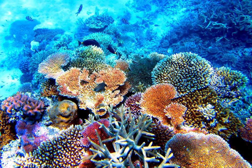 Ученые констатируют ухудшение состояния Большого Барьерного рифа