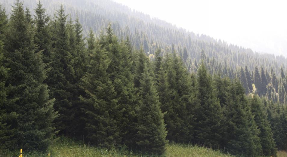 Зарубежная компания вложит $1 млн в создание лесных массивов в РК