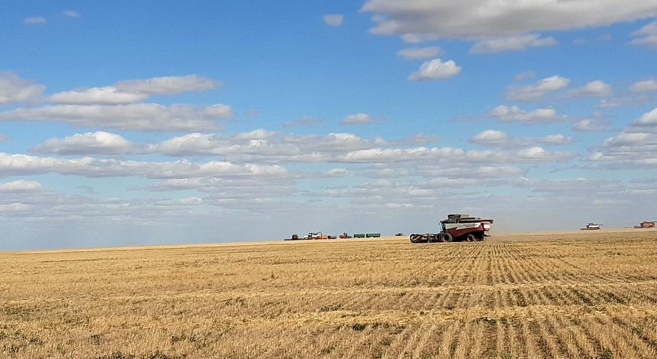 Борис Князев: Улучшителей много, но всем нужна хорошая пшеница