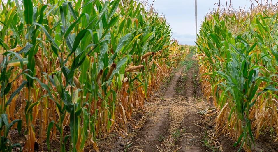 Торговля упала, поднялись промышленность и сельское хозяйство